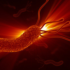 Helicobacter Pylori - Closeup / Detailed Zoom