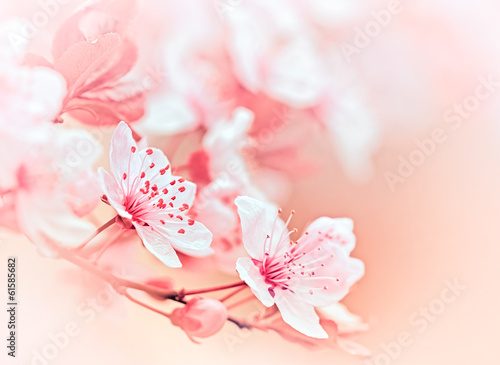 Blooming fruit tree - flowering