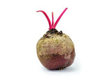 Beetroots isolated-Beta vulgaris