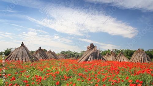 Poppy flower and stacked dry reed, landscape