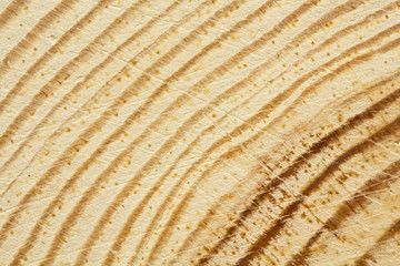 Closeup of pine tree texture with scratches as a background