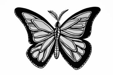 disegno di farfalla su sfondo bianco