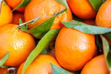 Frische mandarinen clementinen Orangen mit frischen grünen blä
