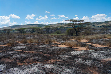 Wildfire in African savanna