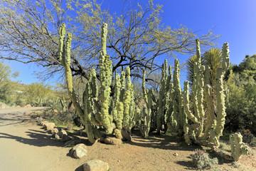 Montrose Totem Pole, Southern Arizona