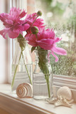 Closeup of peony flowers in milk bottles