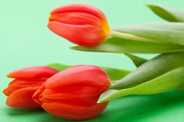 Schöne frische rote Tulpen als Blumenstrauß zu ostern und Vale