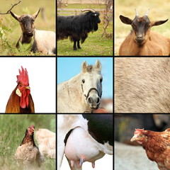 some animals from the farm