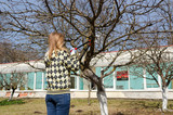woman cut fruit tree branch with garden secateur