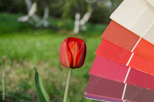 red tulip compared with color card palette