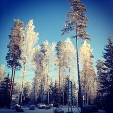 zimowy las w słoneczny dzień