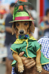 Dog in Hat Costume Rio Animal Carnival