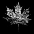 White Grunge Maple Leaf