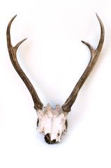 This is horns of deer very well kept.