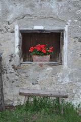 Blumen an einem Fenster