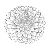 black and white flower isolated on white