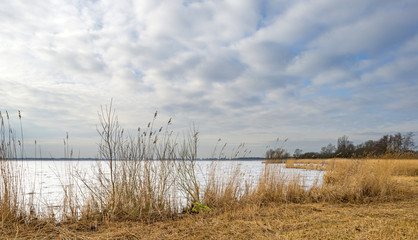 Reed bed along a lake in winter