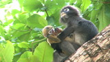 Mother monkey and baby monkey on tree.
