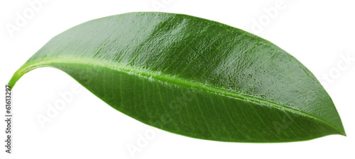Beautiful green leaf, isolated on white