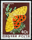 HUNGARY - CIRCA 1974: A Stamp printed in Hungary shows butterfly