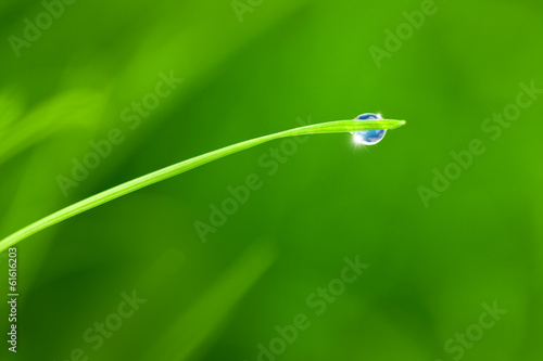 Dewdrop with Sky reflection on Blade of Grass / copy space backg