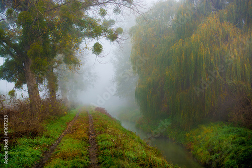 foggy morning, misty trail