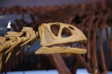 草食恐竜の頭