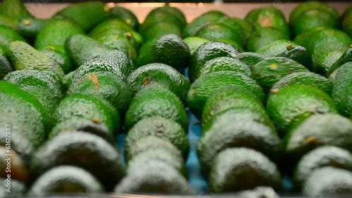 Avocados hass in packaging line, close up