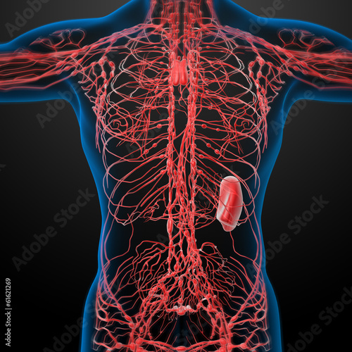 lymphatic system - close up