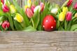 Gepunktetes Osterei und Tulpen