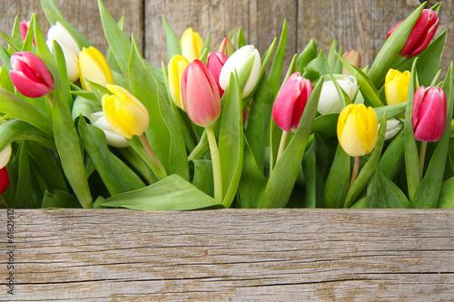 Foto op Aluminium Uitvoering Tulpen