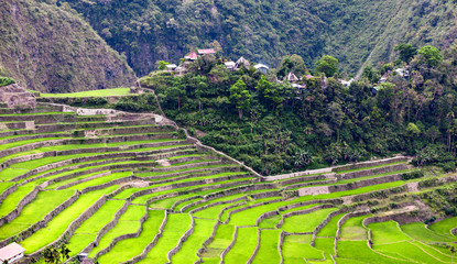 Village inbetween the rice fields