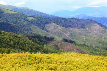 Mountain landscape. Felling of trees in the mountains.