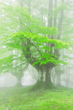 trees in forest with fog on spring