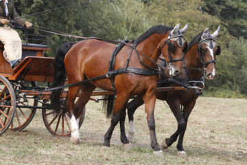 Pferdegespann vor einer Kutsche