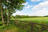 Fototapety Green spring landscape
