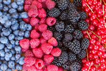 Rzędy świeżych owoców na stole