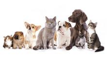 Grupa kotów i psów w białym tle, kotów i psów