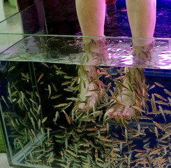 fish spa feet