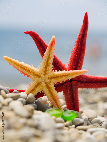 Red and yellow starfishes on the shore
