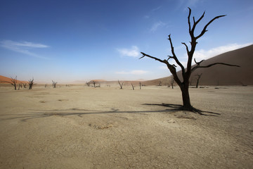 Shade of a dead tree on Deadvlei