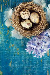 Quail eggs with feathers for easter decoration celebrations