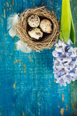 quail's eggs in a nest on blue wooden board and copy space
