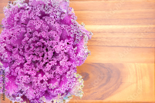 Texture of colourful curly-leaf purple kale