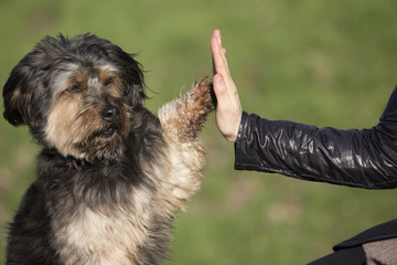 High Five zwischen Hund und Frau