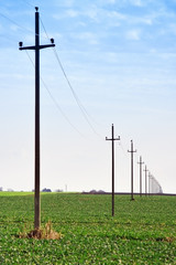 Telephone poles in the field