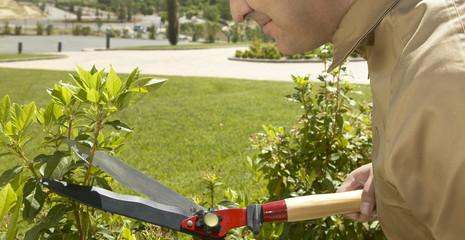 Gardener cut a plant