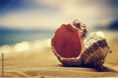 .Seashell in the sand