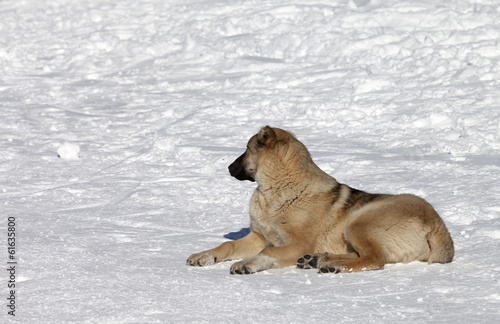 Dog resting on snowy ski slope at nice sun day