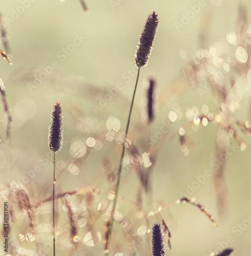 Fototapeta samoprzylepna Summer meadow